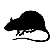 Rats, Moles, Squirrels and other Pests
